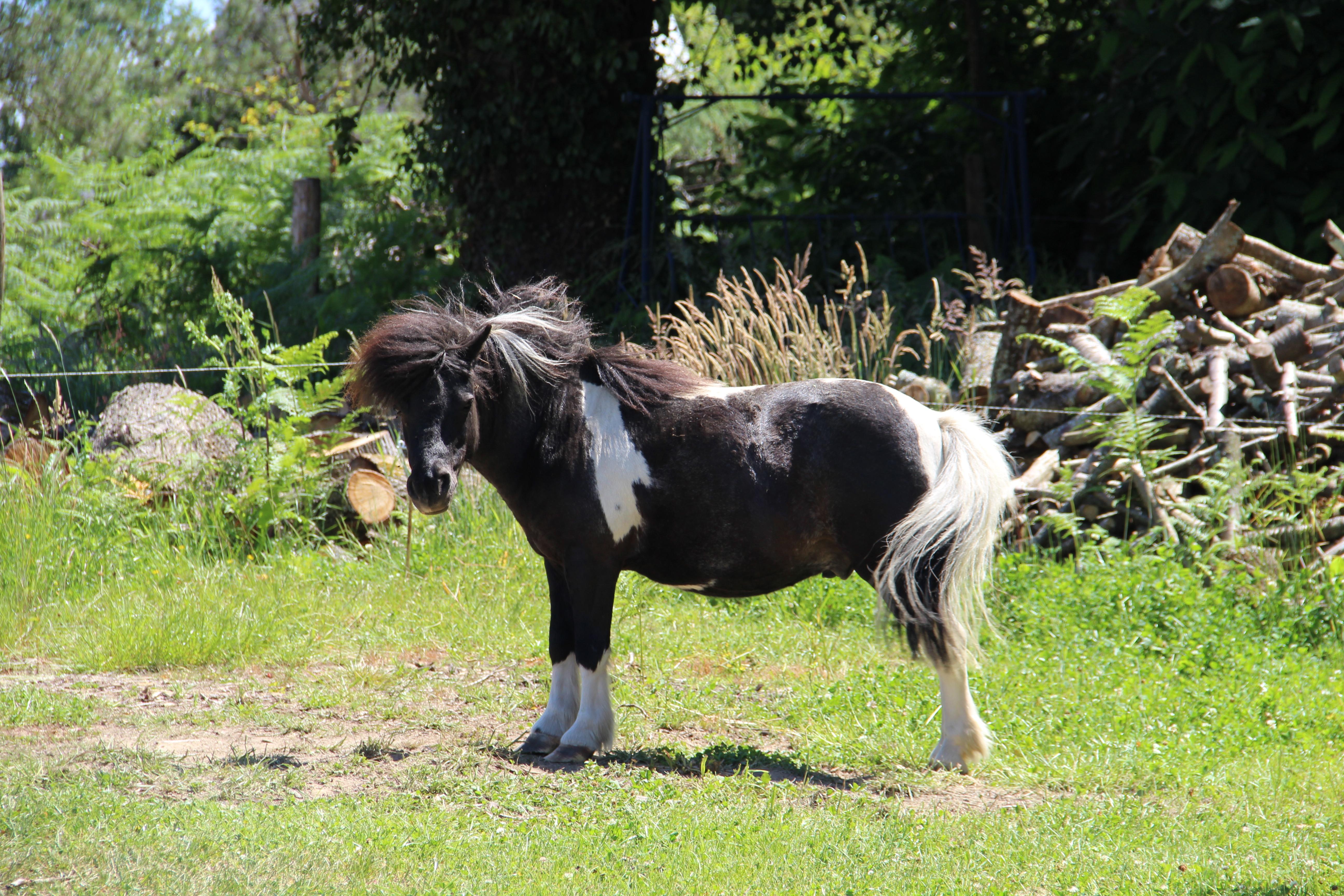Victor le poney